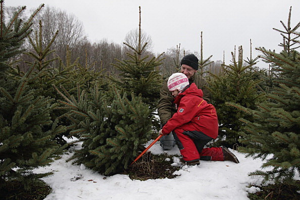 Awesome Cut Your Own Christmas Tree Mn Part - 11: Where To Cut Your Own Christmas Tree In Grand Rapids, West Michigan