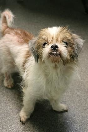 """""""Scooter""""/Humane Society of West Michigan"""