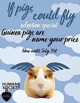 Humane Society Guinea Pig Special 2017 r