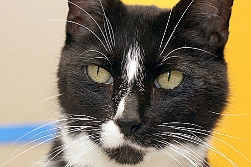 Adopt Jamie From Crash's Landing