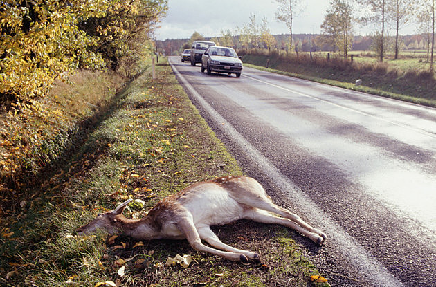 Want to Keep Michigan Road Kill? Know the Law