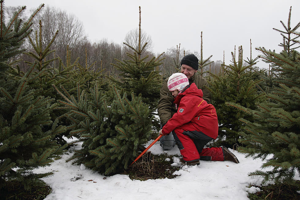 where to cut your own christmas tree in grand rapids west michigan - Cut Your Own Christmas Tree